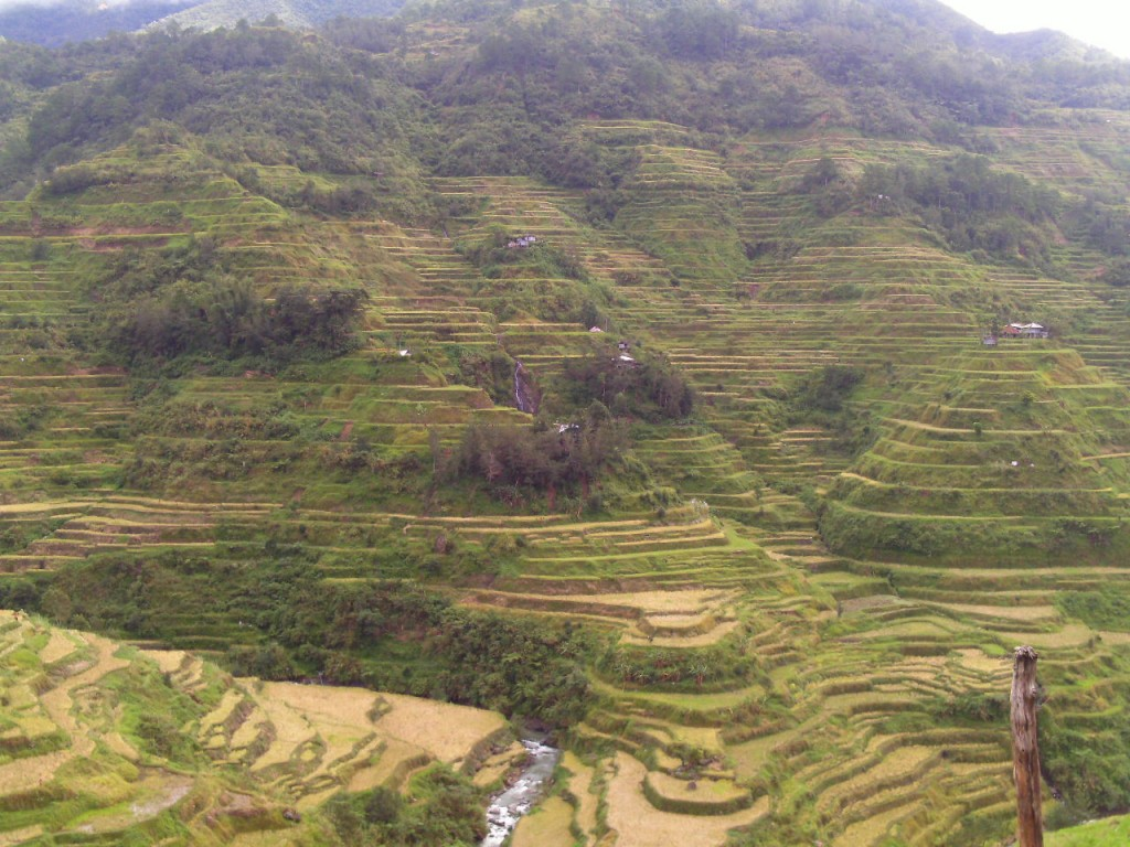 wazat? banaue rice terraces